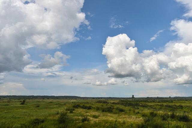 Жители Хабаровского края уже могут оформлять бесплатные гектары